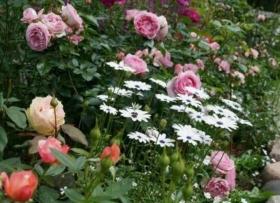 Roosa ja lilla